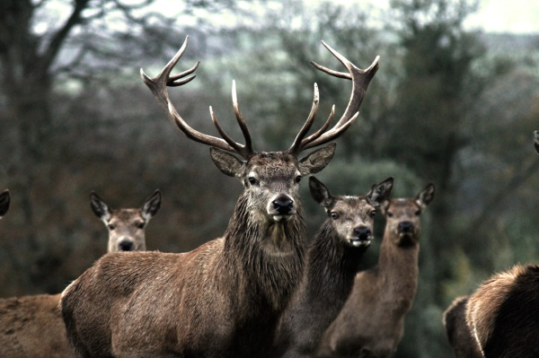 stag12